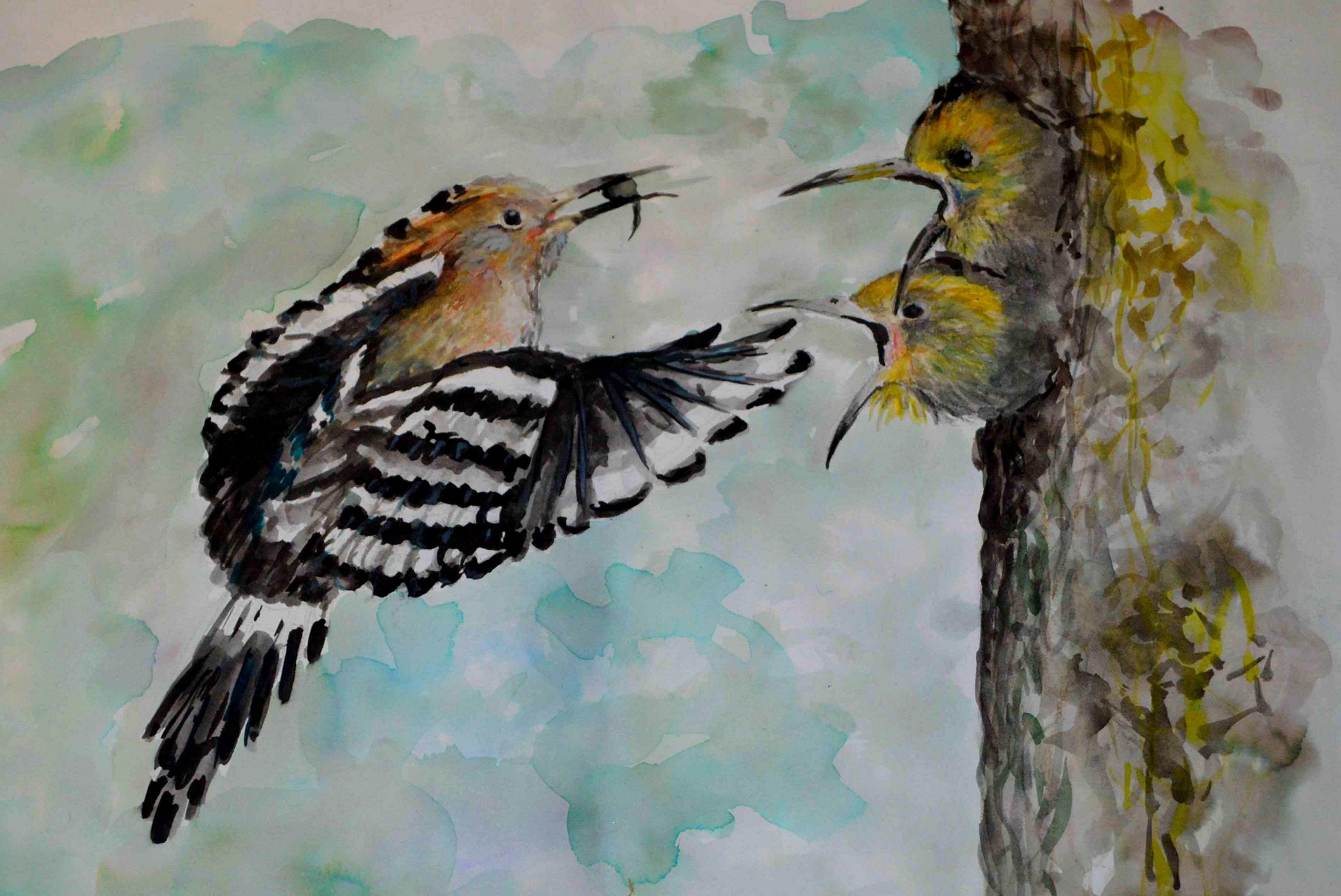 Év madara rajzkiállítás (Fotó: Golen Gerhárd)