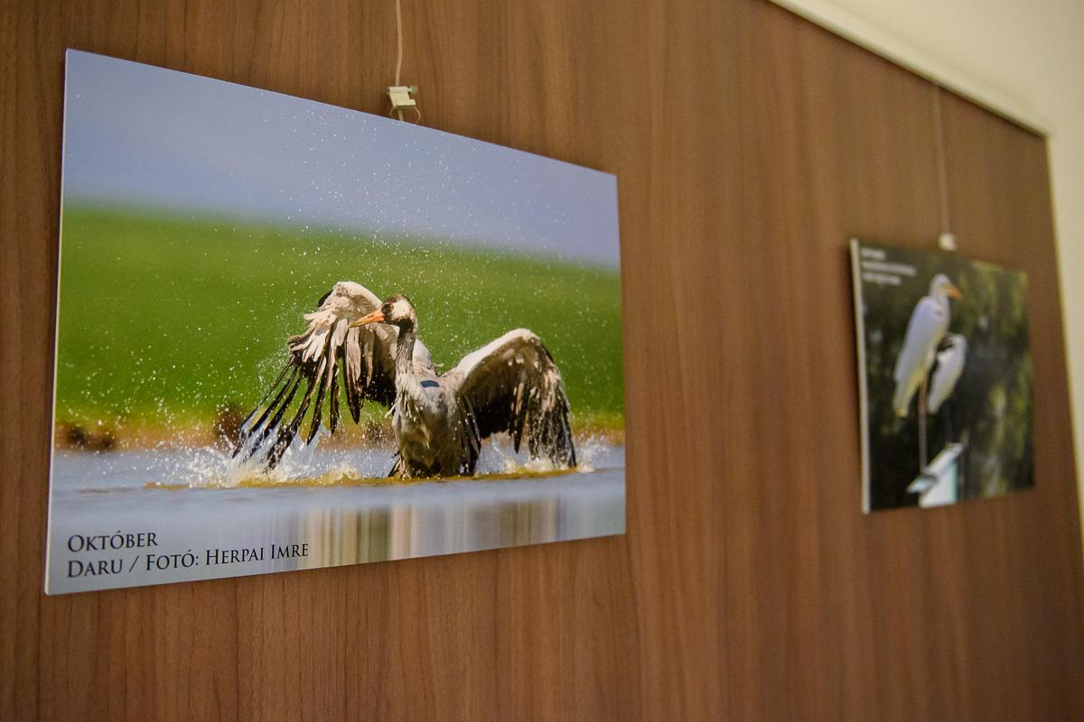 """""""12 hónap madarak közt"""" témával nyitott tárlatot az MME Bükki Helyi Csoportja (Fotó: Kakuk Dániel)"""