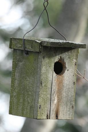 Mesterséges madárodú lóg egy faágról (Fotó: Orbán Zoltán).