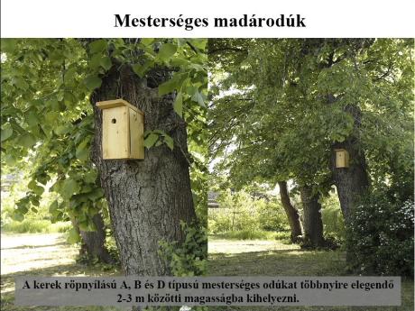 Dia a honlapról letölthető Madárbarát kert Power Point előadásból (Fotó: Orbán Zoltán).