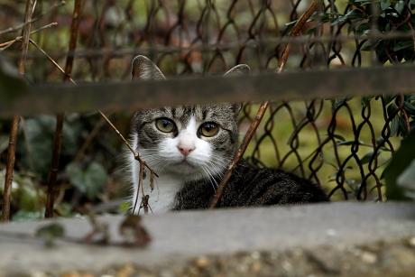 Szakértőink tanácsa az Ön macskájával kapcsolatban