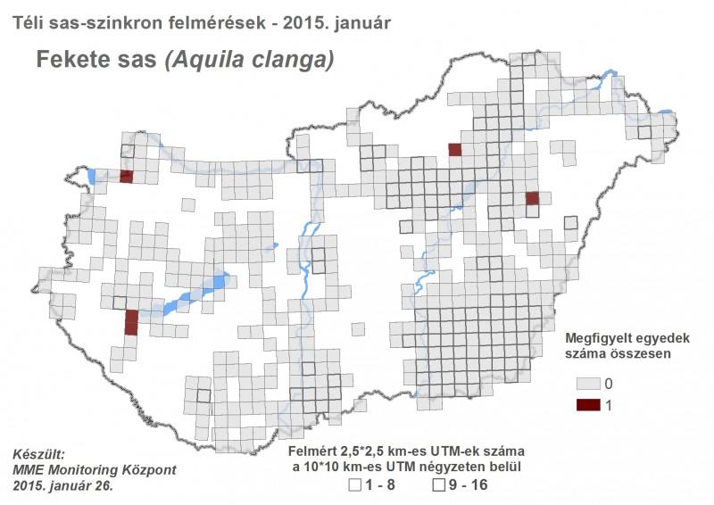 Fekete sas megfigyelések - 2015. évi téli sasszinkron (forrás: MME Monitoring Központ).