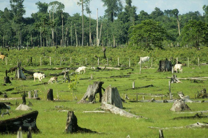 Esőerdők védelme