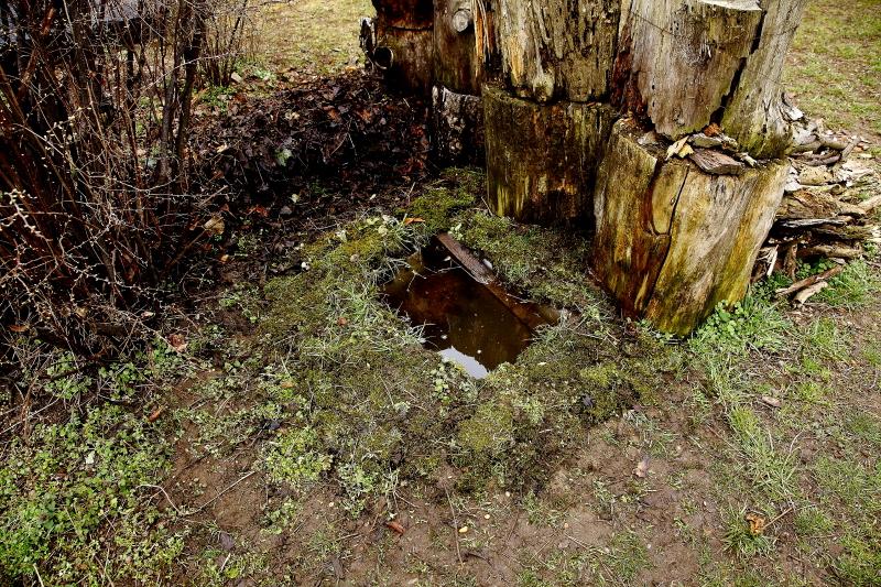 """Béka peterakóhely kertben, földbe süllyesztett """"tejes ládából"""" (Fotó: Orbán Zoltán)"""