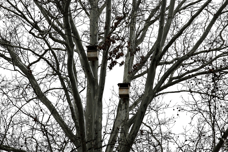 Vércse költőládák települési fasorba kihelyezve (Fotó: Orbán Zoltán)