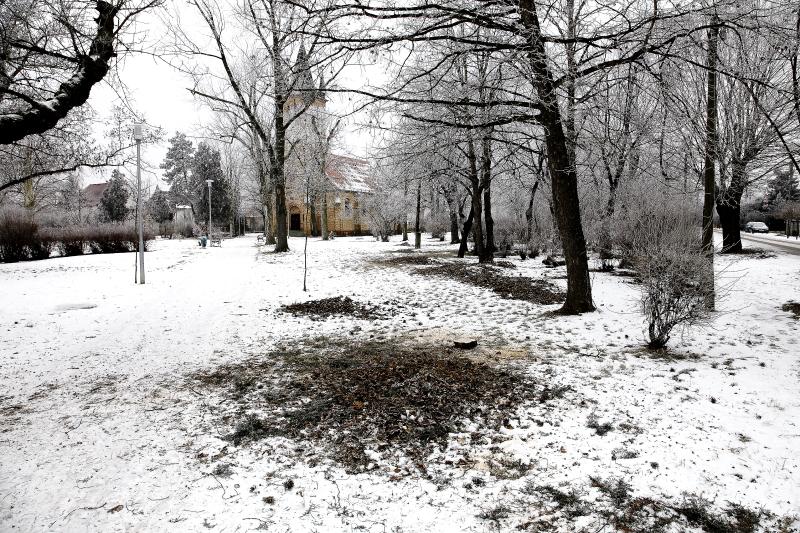 Téli parkgondozás megfelelően ütemezett fakivágással a fővárosban (Fotó: Orbán Zoltán)