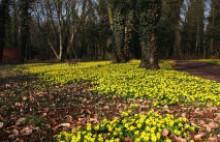 Virágtakaró (Fotó: Flickr)