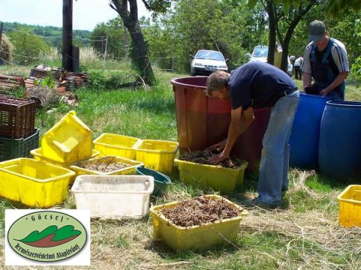 Komposztkas készítése