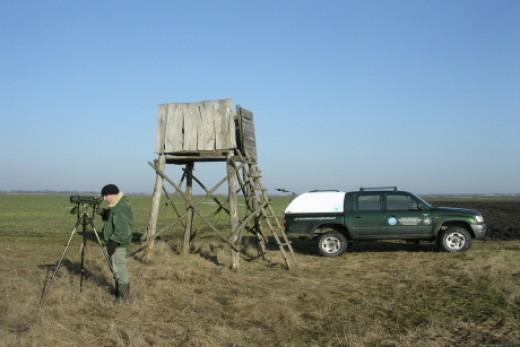 Madármegfigyelés a sasszinkron keretében (Fotó: Horváth Márton)