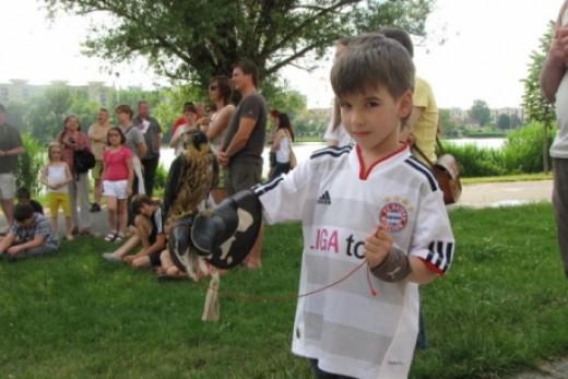 madárbemutató Székesfehérváron (fotó: Gajdóczi Mónika)