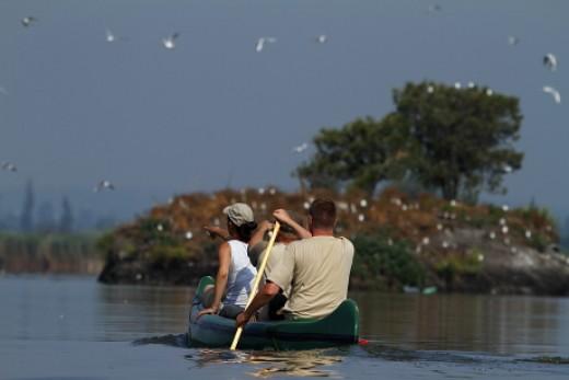 A soponyai sirálytelep-sziget felé közeledő kenu (Fotó: Orbán Zoltán).