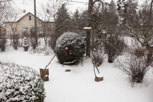 Madárbarát kert télen (Fotó: Orbán Zoltán/MME).