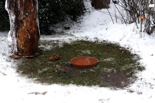 Hóeltakarítással és melegvizes locsolással kialakított talajetető  (Fotó: Orbán Zoltán).