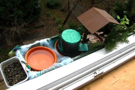 Miniatűr madárvédelmi központ ablakpárkányon (Fotó: Dell Dorottya)..
