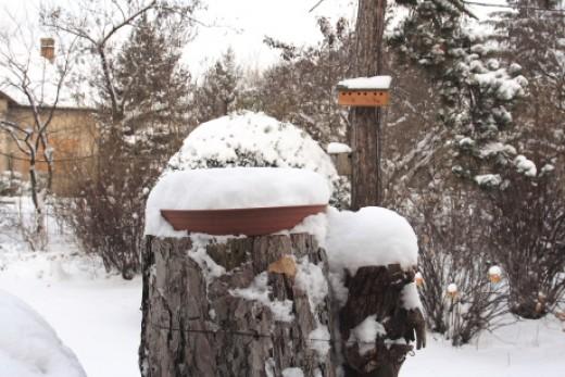 Hósipkás etetőtálca havazás után (Fotó: Orbán Zoltán). A hó nemcsak a fedetlen etetőket és az itatókat, de az ágak és a talaj természetes táplálkozóhelyeit is elzárja a madarak elől.