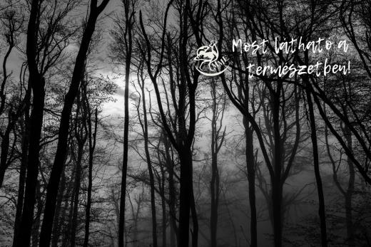 Köd (Fotó: Sztrehárszki Lili - 2020 Európa Legjobb Ifjú Természetfotósa)