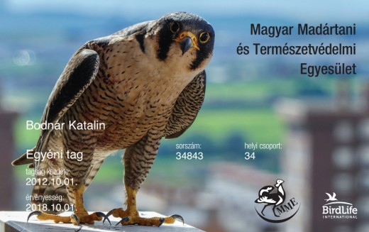 Tagkártya 2018 év madarával - a vándorsólyommal (Forrás: MME)