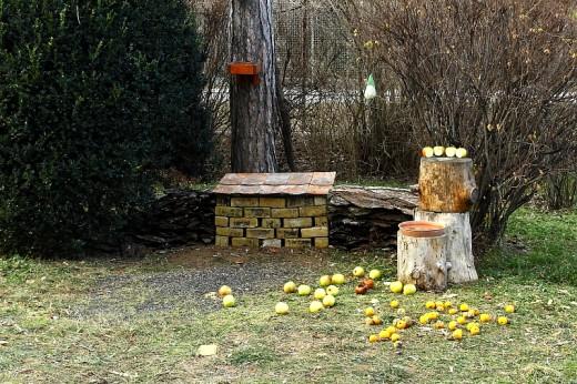 Énekesmadár talajetetővel kombinált egérvár (Fotó: Orbán Zoltán).
