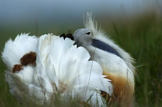 Áramütés által veszélyeztetett madárfajok