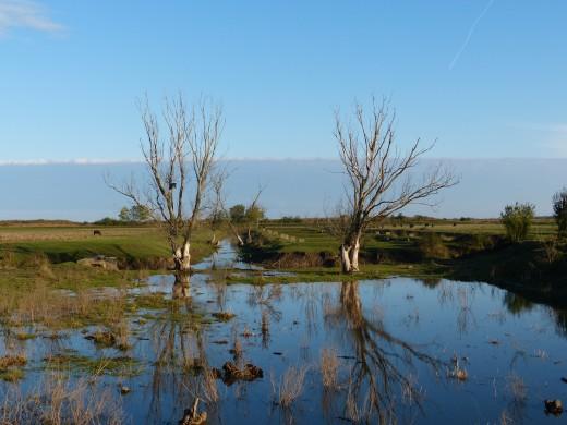 Vizes élőhely (Fotó: Kerékgyértó Róbert)