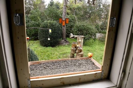 Ablak elé telepített etetők, itató és mesterséges odúk a madarak minél jobb téli megfigyelése, és élményeink megörökítése érdekében (Fotó: Orbán Zoltán).