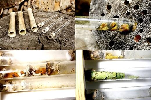 A látvány-méhecskehotel nem csak az egyik legegyszerűbb, de az egyik leglátványosabb természetvédelmi eszköz is egyben (Fotók: Orbán Zoltán).