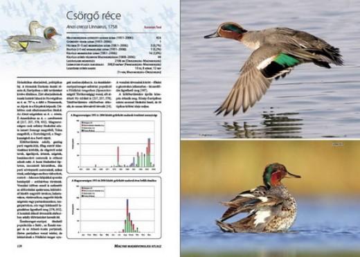 A Magyar madárvonulási atlasz egyik belső oldala