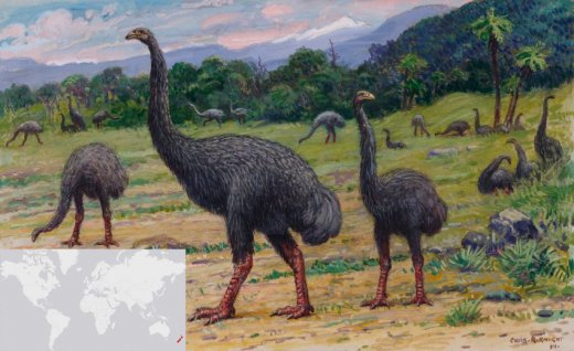 A moák Új-Zélandon éltek (Illusztráció: Charles R. Knight).