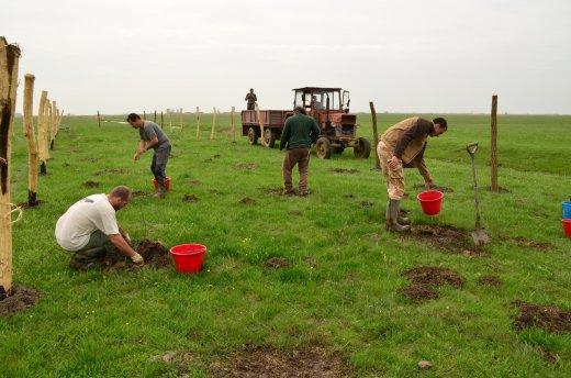 Szalakóta Gazda Program: párhuzamosan zajlott a csemeték ültetése és a kerítésoszlopok állítása (Fotó: Sós Tibor)