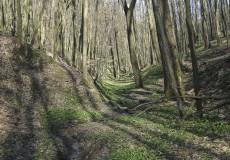 Közönséges lábatlangyík élőhelye