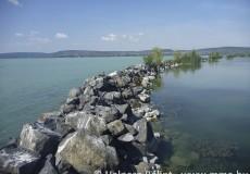 Kockás sikló kedvelt élőhelye a Balatonnál.