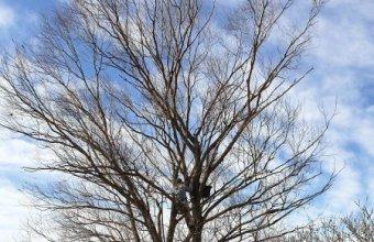 A telep egyik fája (Fotó: Lendvai Csaba)