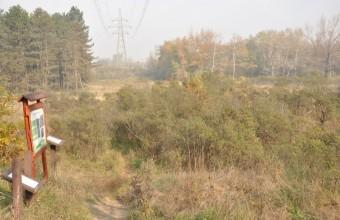 A Homoktövis természetvédelmi terület (Fotó: Lendvai Csaba)