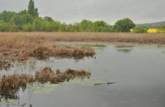 A Merzse-mocsár látképe (Fotó: Lendvai Csaba)