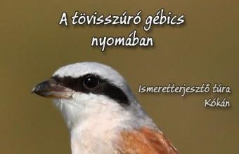 Tövisszúró gébics túra 2016 - Kóka