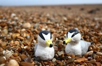 Élethű kis csér makettek (Fotó: Emily Irving-Witt).