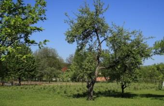 Madárbarát kert (Fotó: Orbán Zoltán).