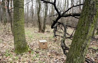 Erdő talajára kihelyezet madárodú kisemlős lak (Fotó: Orbán Zoltán).