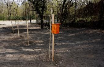 B odú új ültetésű fiatal fához kihelyezve (Fotó: Orbán Zoltán).