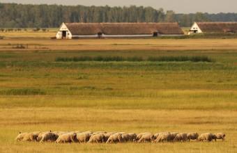 Állattartás (Fotó: Lóki Csaba)