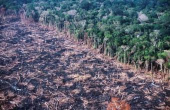Erdőirtás az Amazonas-medencében