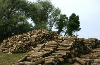 Fakitermelés (Fotó: Göcző Gabriella).