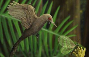 Az Oculudentavis valószínűleg apró rovarokkal táplálkozott (illusztráció: Han Zhixin)