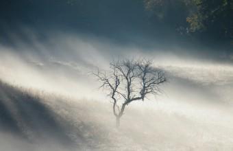 Köd (Fotó: Kerékgyártó Róbert)