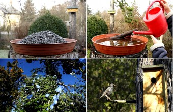 Az MME Madárbarát kert programja az év minden hónapjára kínál tevékenységet és megfigyelési élményt (Fotók: Orbán Zoltán).