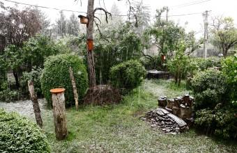 Behavazódó Madárbarát kert Budapesten, 2017. április 19-én (Fotó: Orbán Zolán).
