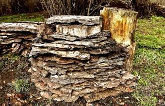 Üreges fatuskóból és kéregből kialakított potenciális fészkelőhely (Fotó: Orbán Zoltán).