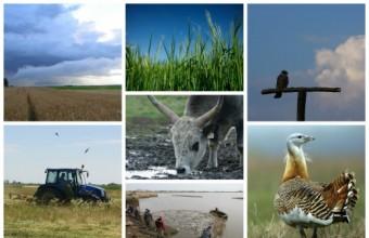 A Natura 2000 játéksorozat célja a gyerekek természetvédelmi ismereteinek bővítése (Fotók: MME archívum).