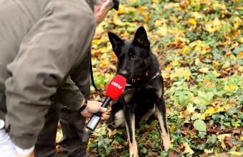 Falco, a HELICON parlagisas-védelmi LIFE+ projekt méreg- és tetemkereső kutyája (Fotó: Orbán Zoltán).