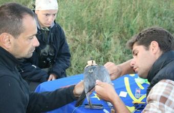 """""""Ubul"""" jeladózása – 2014.09.14-15., Duna-delta, Románia"""
